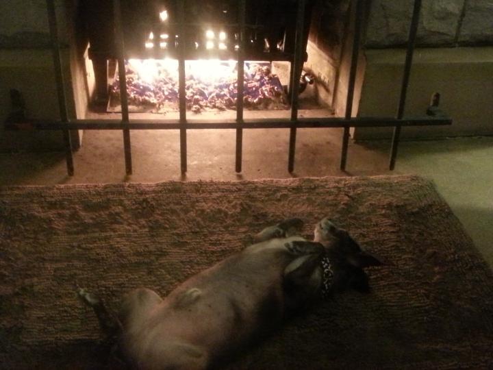 Warm Dog! Happy Dog!