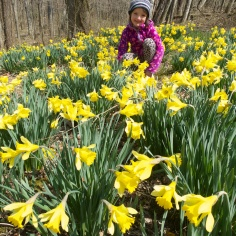 My Daffodil Girl